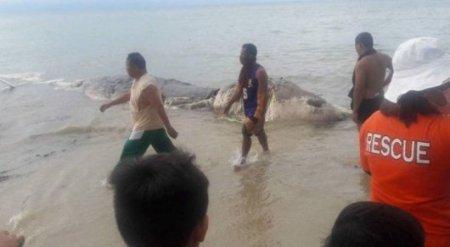Неизвестного морского монстра прибило к побережью Филиппин