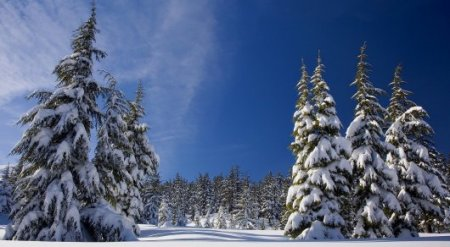 Ранняя зима. Подробный прогноз от синоптиков