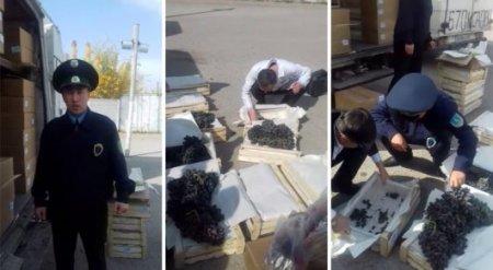 Зараженные виноград, хурму и яблоки везли из Кыргызстана в Казахстан