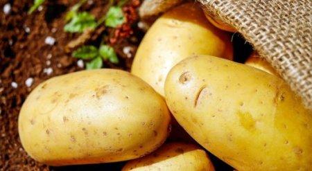 Приведет ли к дефициту ограничение на ввоз картофеля из Кыргызстана в РК