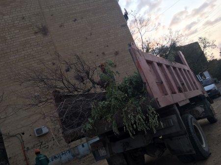 Вырубка деревьев!!!