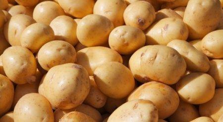 """Почему казахстанский картофель дорожает и уходит в Узбекистан: Названа """"справедливая"""" цена"""