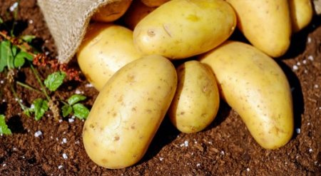 На 90 процентов снизился импорт картофеля - Минсельхоз РК