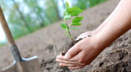 В честь новорожденных астанчан будут высаживать деревья