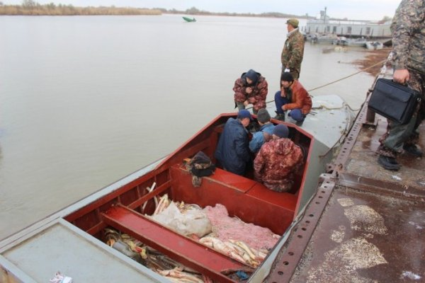 Более тонны осетровых изъяли у браконьеров в Атырауской области
