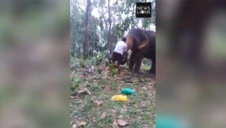 Слон отправил в нокаут подростка, который хотел взобраться по его хоботу