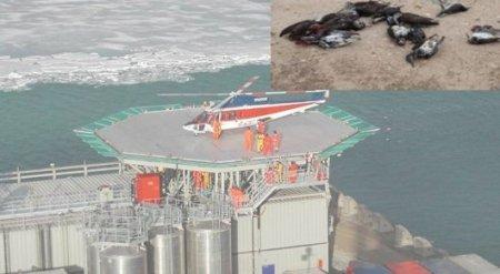 За гибель жаворонков на Кашагане нефтяникам предъявили претензии