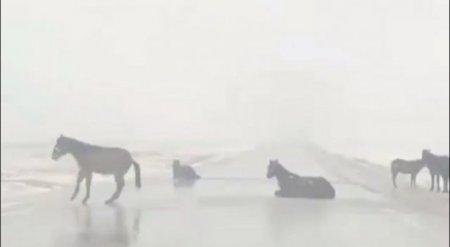 """Верблюды и лошади скользят на """"катках"""" на казахстанских трассах"""