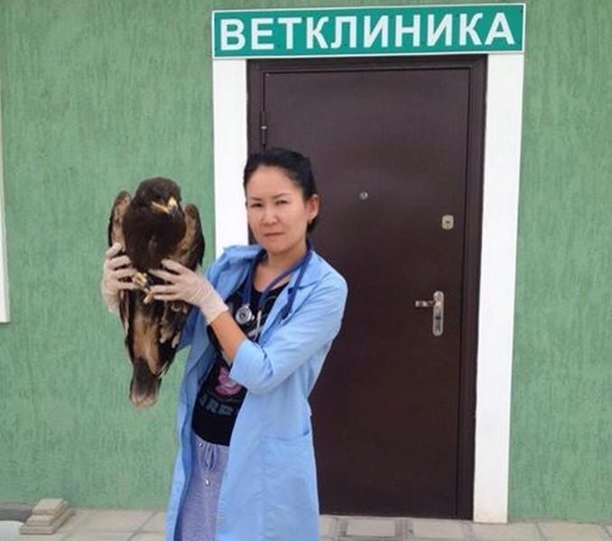 Зверополис: Что нужно знать владельцам домашних животных в Актау