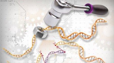 Китай начал массово редактировать ДНК людей