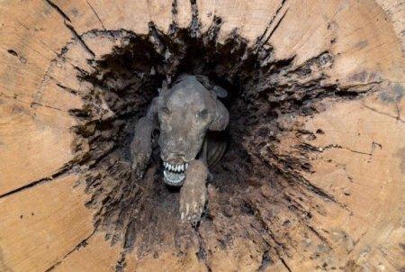 Лесорубы спилили дерево и нашли внутри собаку, пропавшую 20 лет назад