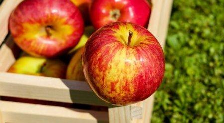 С каких яблок советуют срезать кожуру