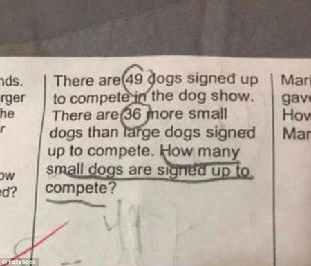 Детская задачка о собаках поставила родителей в тупик