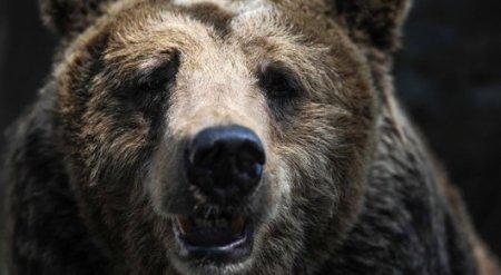 Американец напал на медведя, чтобы спасти своего щенка