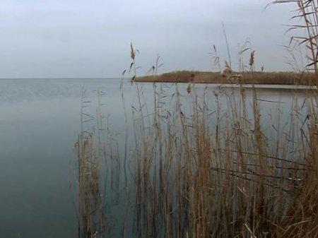Из-за ртути рыбы мутируют в озере в Павлодаре
