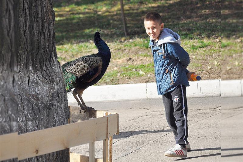 Некоторых птиц выпустили из вольеров в зоопарке Алматы