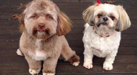 Фото собаки с человеческим лицом напугало пользователей Сети