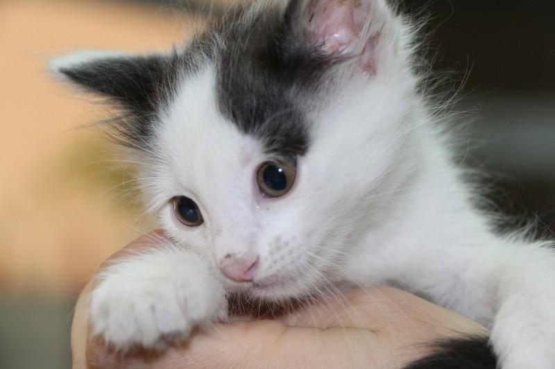 Ладный котенок ищет хозяев