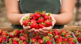 В США официально назвали 12 продуктов, вызывающих рак, бесплодие и ожирение
