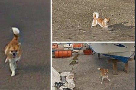 Забавный пес испортил панораму Google Maps и прославился