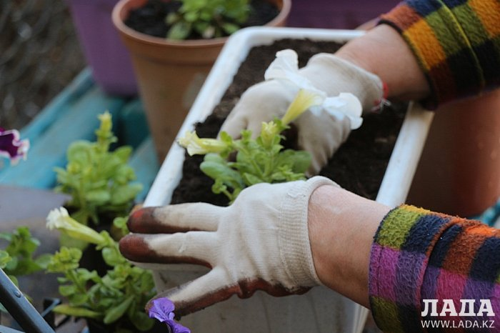 Жительница Актау превратила двор пятиэтажки в цветущий сад