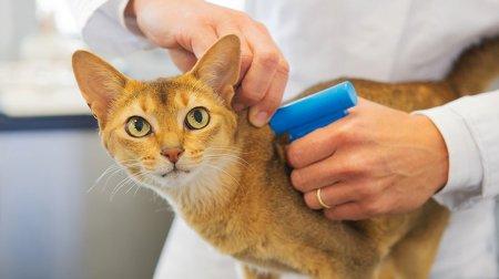 Жителей столицы обяжут чипировать домашних животных