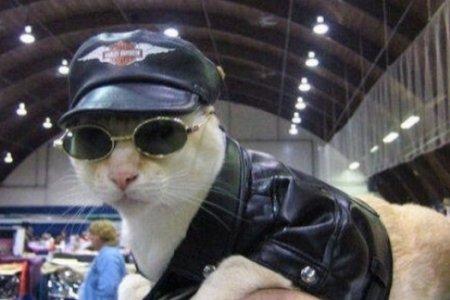 Павлодарские полицейские взяли на работу кота