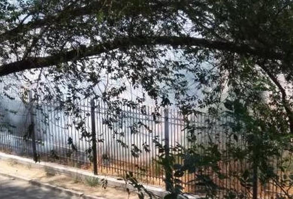 Неубранный сухостой послужил источником возгорания возле школы в Актау
