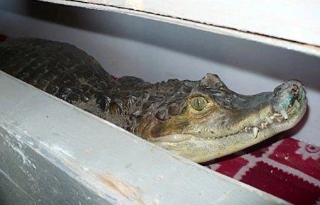 Крокодилов, леопардов и удавов из Казахстана пытались вывезти в Россию
