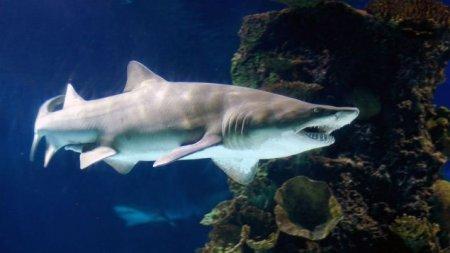 В Техасе из океанариума украли акулу и вывезли ее в детской коляске