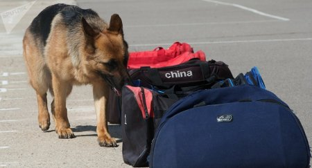 Полицейским собакам в Вене надевают обувь для защиты лап во время жары