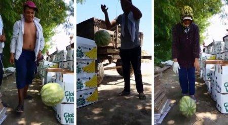 Узбекистанцы сняли на видео небьющийся арбуз
