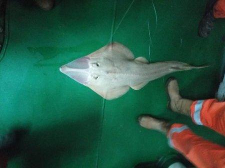 Фото странного улова на Кашагане обсуждают в соцсети