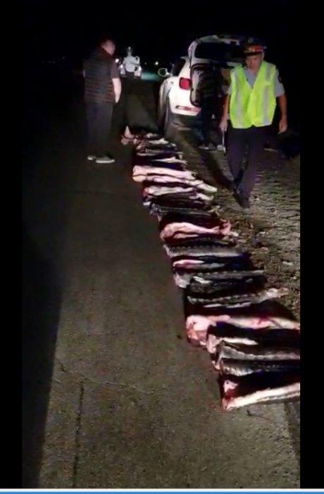 Полицейские Мангистау изъяли у браконьеров 274 килограмма осетровой рыбы