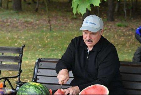 На приусадебном участке Лукашенко собрали 60 тонн картофеля