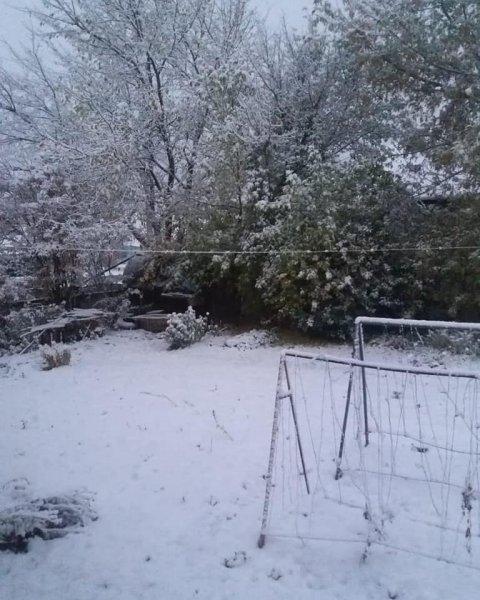 В Северном Казахстане выпал первый снег