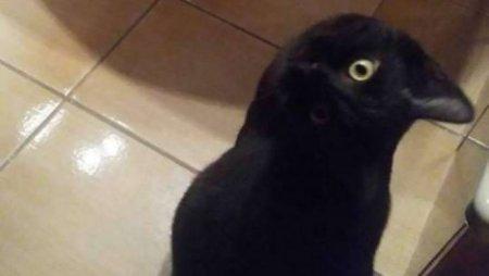 Кот или ворона: Сеть озадачила новая оптическая иллюзия