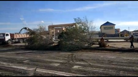 Уничтожают деревья ВИДЕО