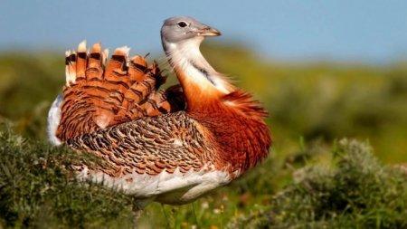 В Казахстане назвали птицу 2019 года