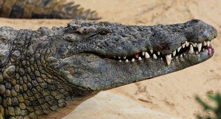 Мужчина покусал крокодила, чтобы спасти сына, на Филиппинах