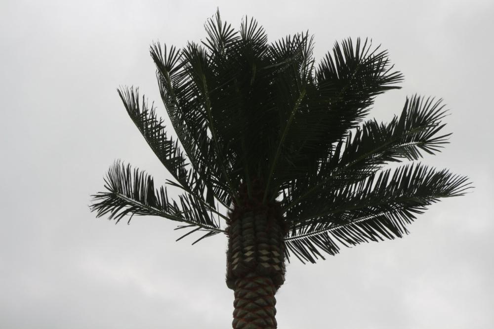 На набережной Актау планируют установить сто искусственных пальм