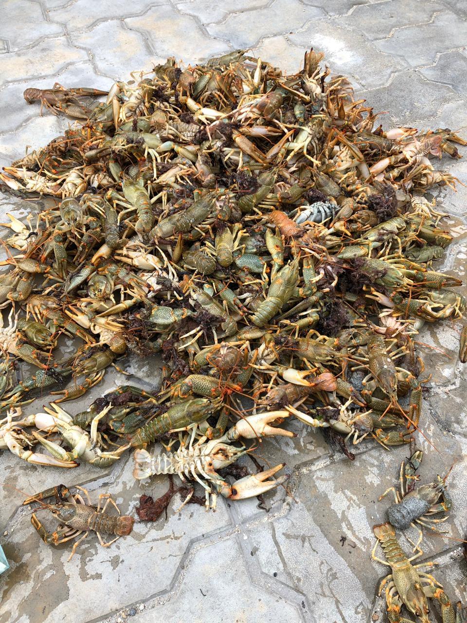 Назвали причину выброса на берег Каспия раков