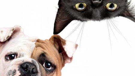 Ученые назвали животных, способных исцелять болезни людей