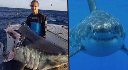 Рыбаки поймали 100-килограммовую голову акулы, откушенную неизвестным хищником