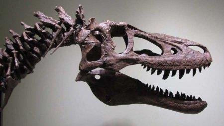 На eBay выставили скелет детёныша тираннозавра почти за 3 млн долларов