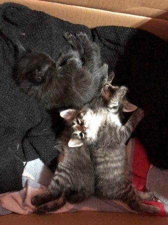 Малыши спасенной кошки ищут дом