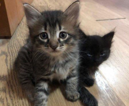 Котята спасенной кошки все еще ждут своих хозяев