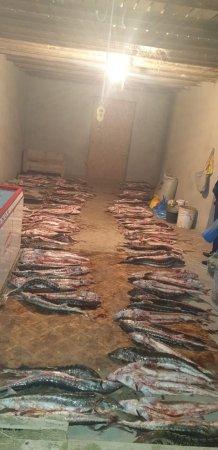 Полицейские Мангистау обнаружили более 900 килограммов осетрины в жилом доме
