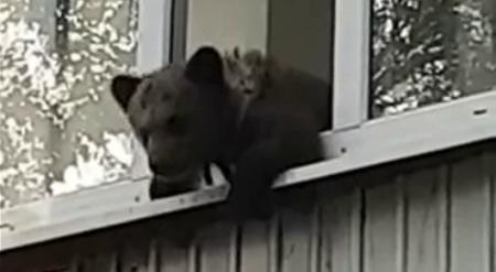 Как медвежонок попал на балкон многоэтажки в Уральске