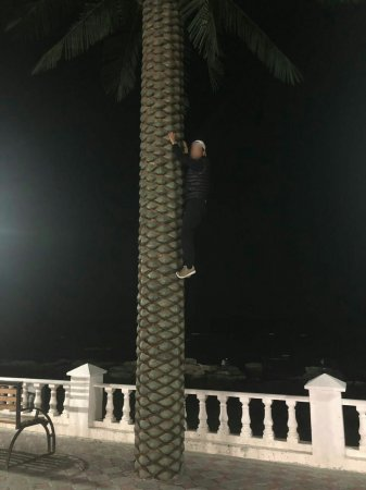 Опять за кокосами?